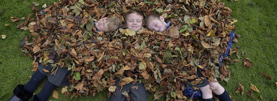 6-10-16 Children from Stanhope Street Primary School, left to right, Gabija Pijoraityte, Kevin Maguire and Layla Rennix get covered with leaves at the launch of National Tree Day.                       Pic Tommy Clancy - No Fee.